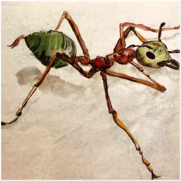 Green tree ant, sciart